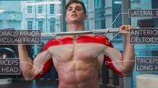 【鍛える部位を明確にしようシリーズ】ショルダープレスで肩周りを鍛えていこう!の写真