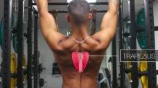 【鍛える部位を明確にしようシリーズ】肩甲骨を動かして懸垂しよう!!の写真