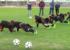 【ジュニア選手の運動能力を養おう】体幹を意識したトレーニング